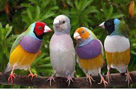 Pengetahuan dasar burung finch