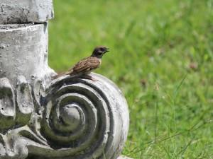 Burung Gereja, Burung yang Kerap Terabaikan