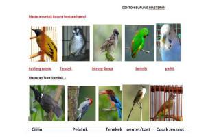 Kumpulan Suara Masteran Burung Kicau