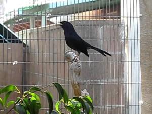 Kebersihan Kandang Jadi Kesuksesan Penangkaran Burung